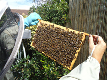 Beginners Beekeeping Theory Course